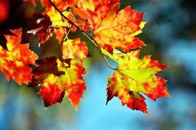 changing seasons, changing moods