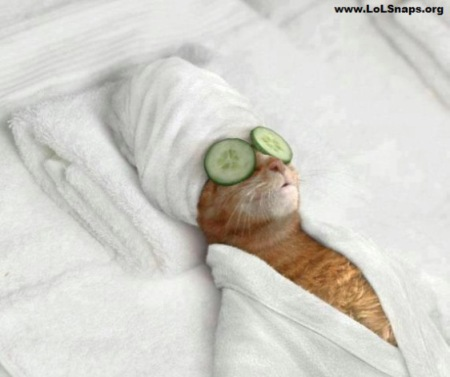 funny-cat-relaxing