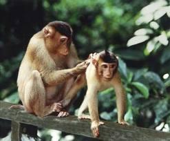 monkeys/zoo
