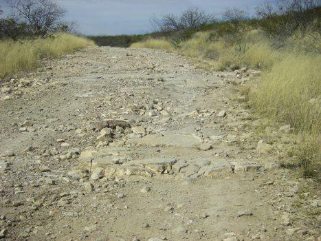 desert-351