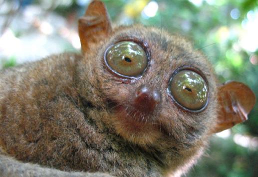 glassy-eyed