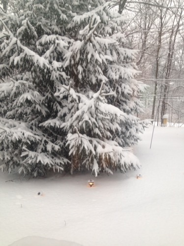 snow on pine tree