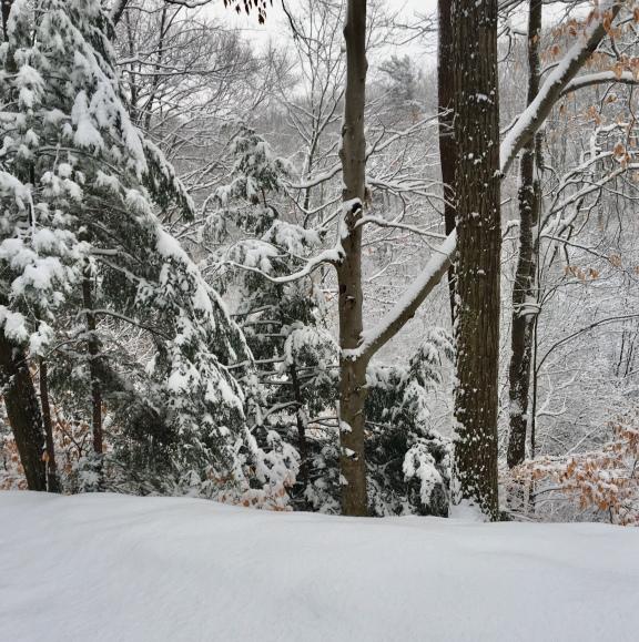 HOffmaster Park/winter/2017