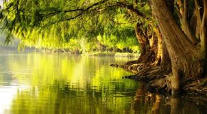 trees/spiritual/faith
