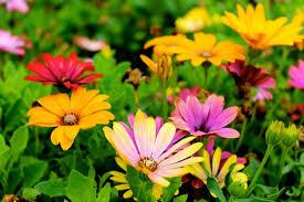 flowers/inspirational/faith