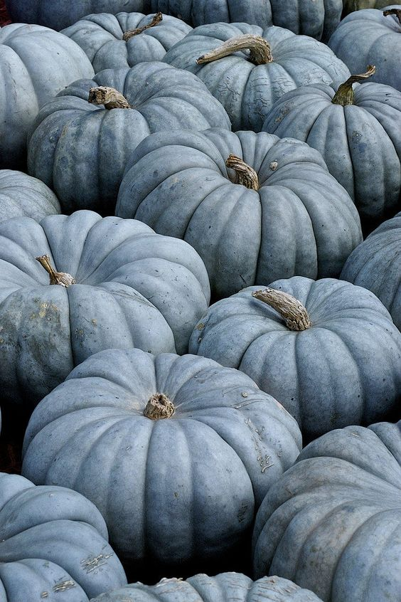informational./ blue pumpkins