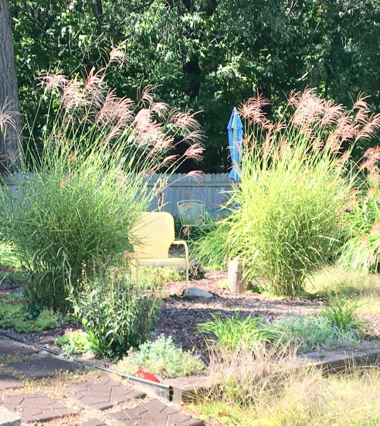 grasses/inspirational/informational